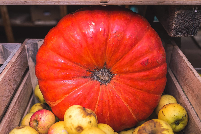 jeden z jesiennych owoców - dynia