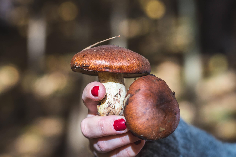 grzyby 5 - Skarby pomorskich lasów – owoce, grzyby i dziczyzna