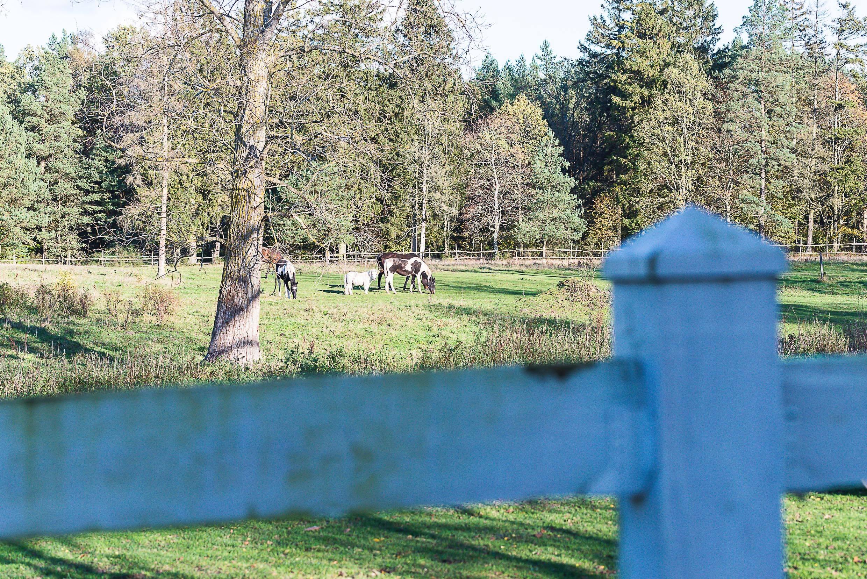 Natura folwarku Jackowo w tle konie