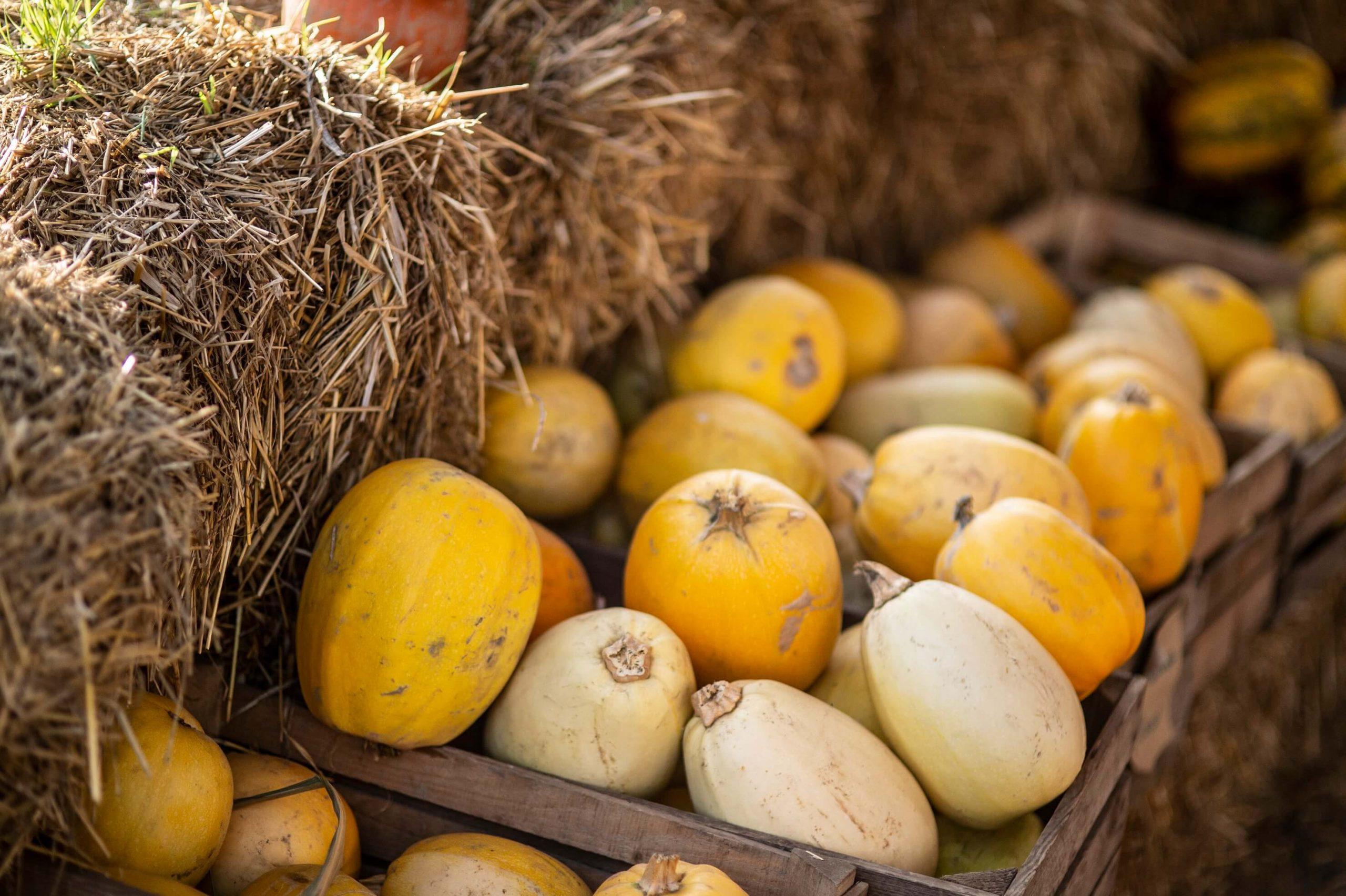 Autumn flavours in Gdański Bazar Natury