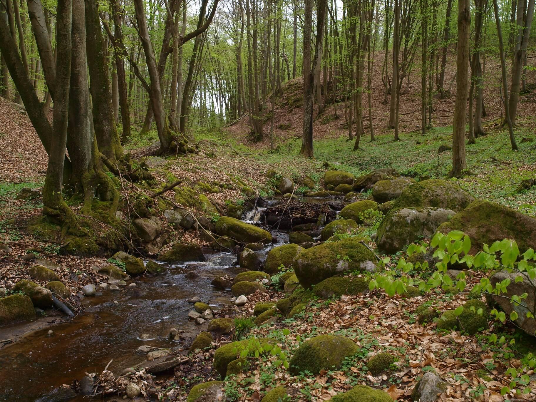 Dolina Slupi PK6 nature trail - Nature trails in Pomorskie: take a stroll and learn something new