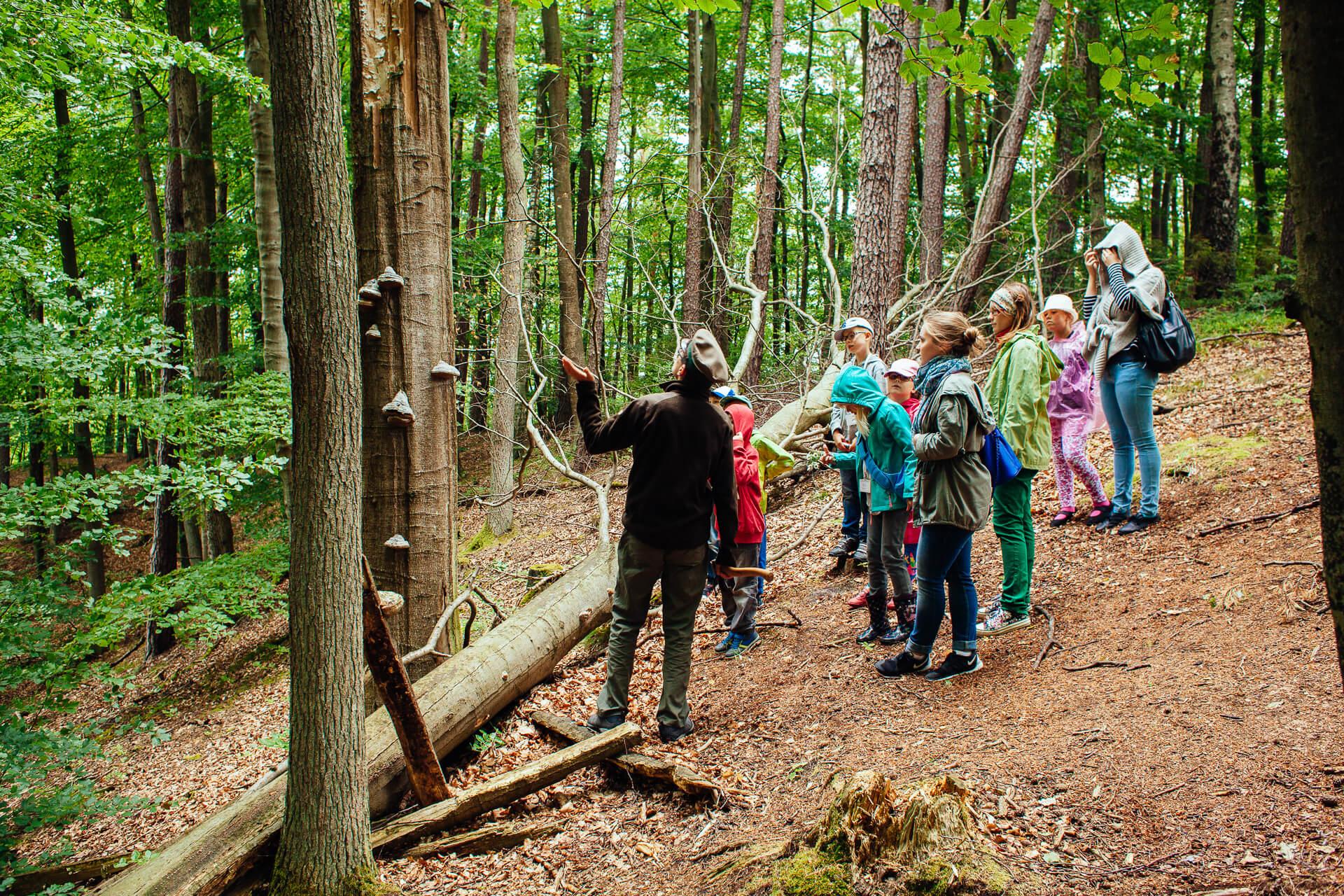 Marszewo sciezki przyrodnicze 5 nature trail - Nature trails in Pomorskie: take a stroll and learn something new