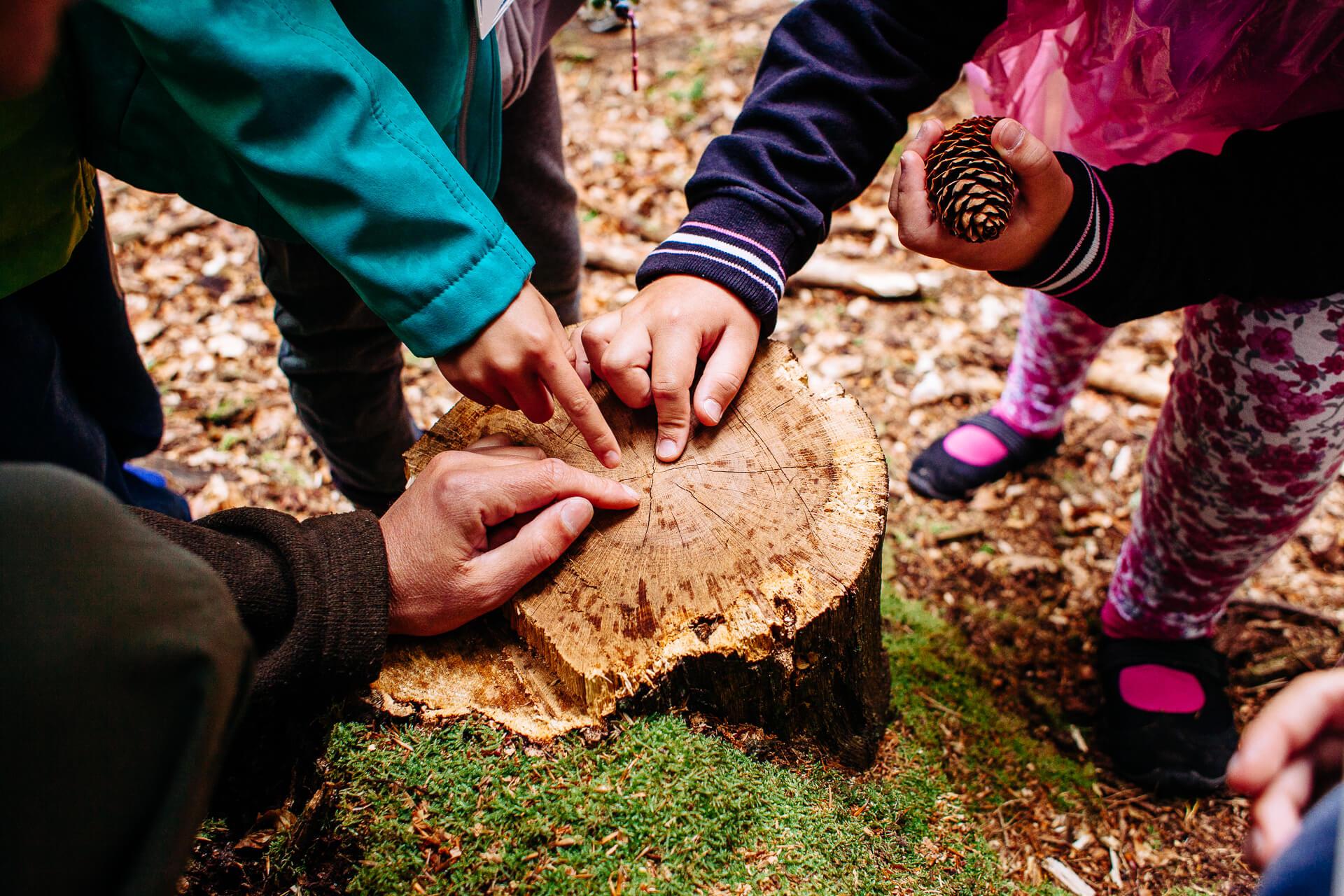 Marszewo sciezki przyrodnicze nature trail - Nature trails in Pomorskie: take a stroll and learn something new