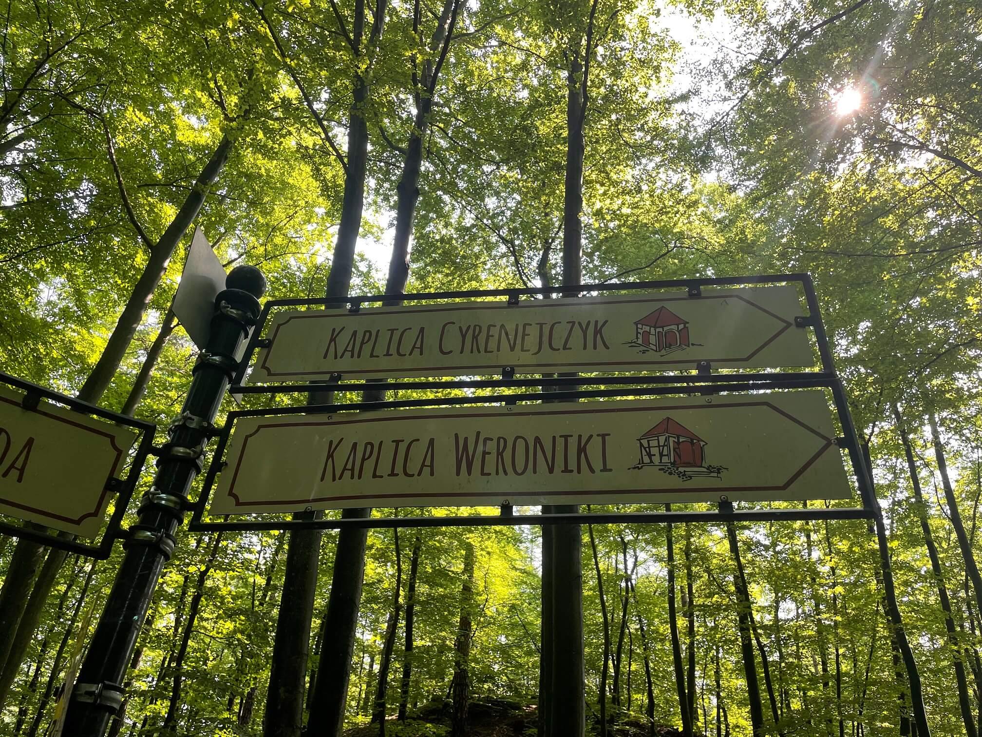 Wejherowo 16 - Wejherowo, zaczarowany las i okolice