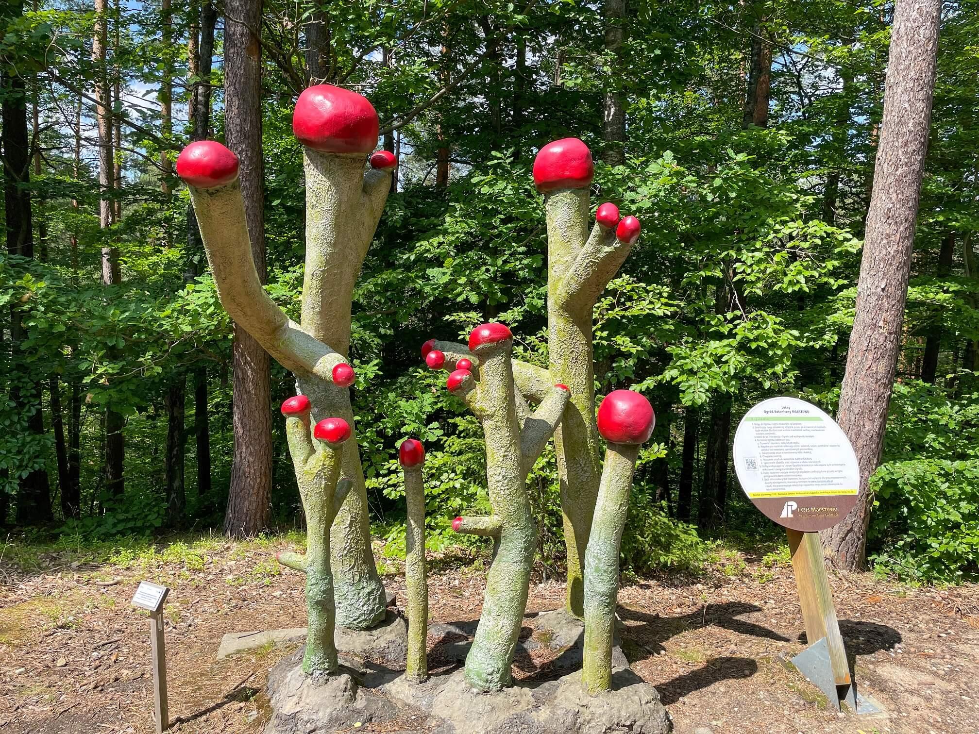 Wejherowo 22 - Wejherowo, zaczarowany las i okolice