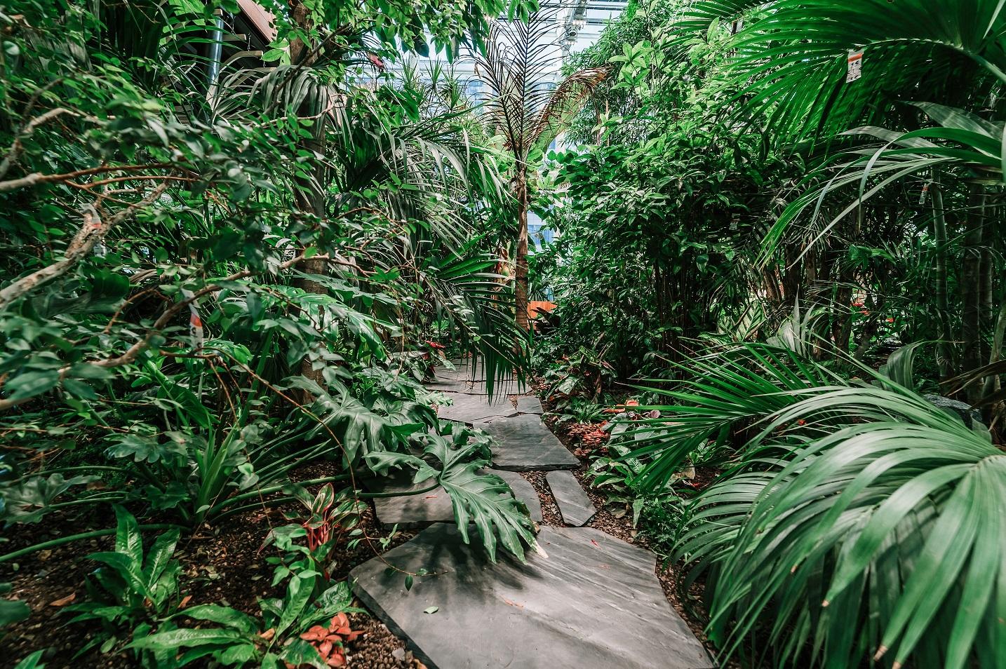 Olivia Garden 2 1 - Olivia Garden- a tropical garden in the heart of Tri-City's business