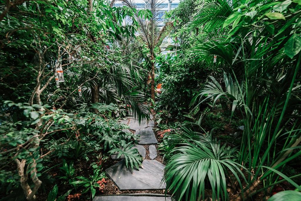 Olivia Garden 23 1 - Olivia Garden- a tropical garden in the heart of Tri-City's business