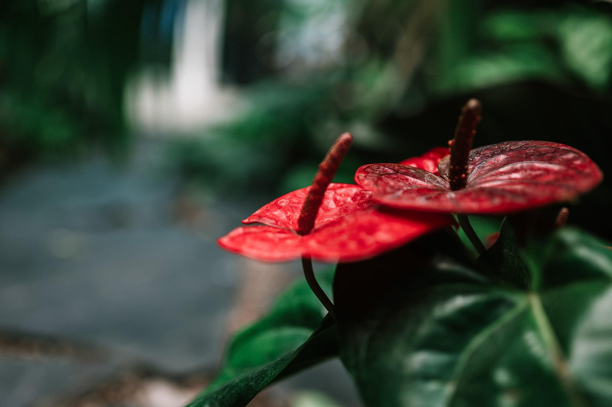 Olivia Garden 24 1 - Olivia Garden- a tropical garden in the heart of Tri-City's business