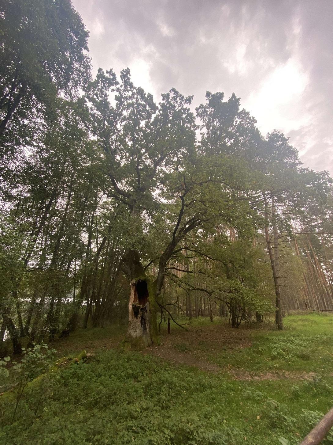 Bory Tucholskie 4 - Bory Tucholskie - sosnowe królestwo